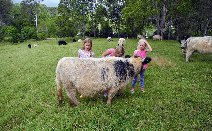 kids and cattle